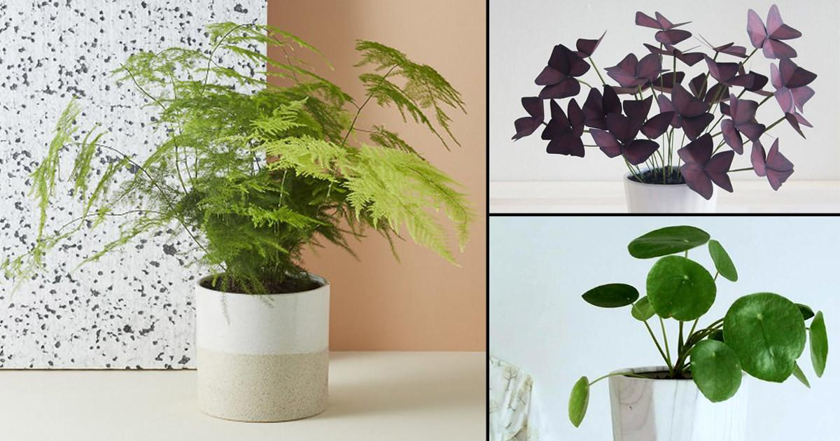 Small House Plants