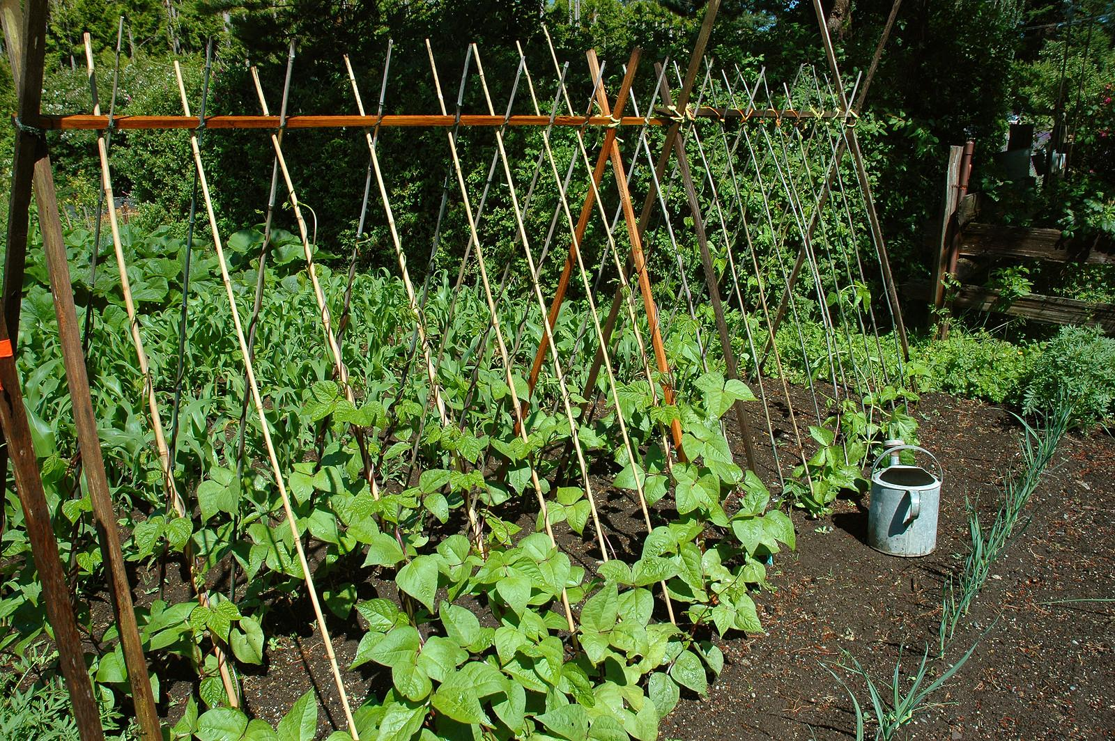 Small Vegetable Garden Space Savers Harvest Table