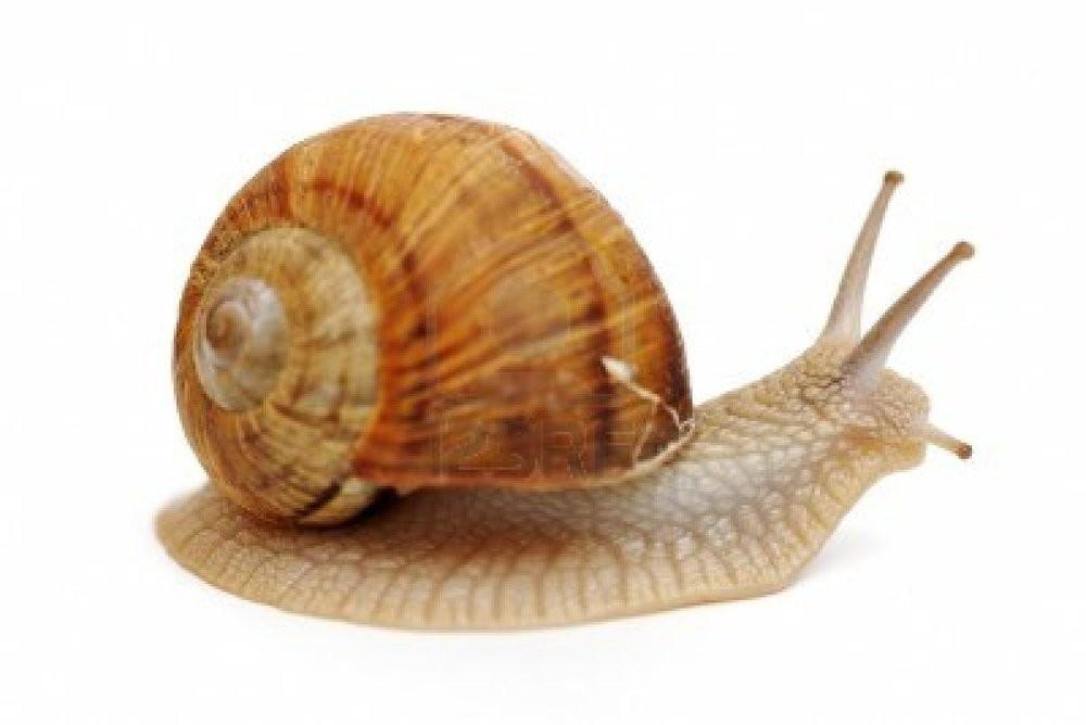 Snail History Some Interesting Facts