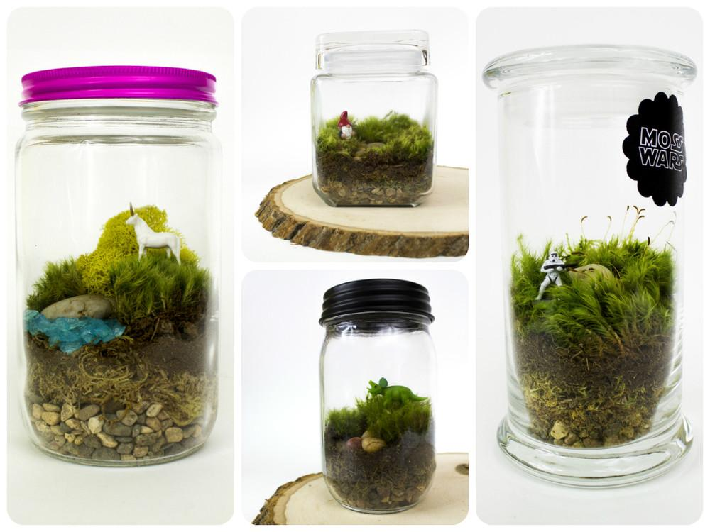 Spring Diy Terrarium Ideas Always Trend