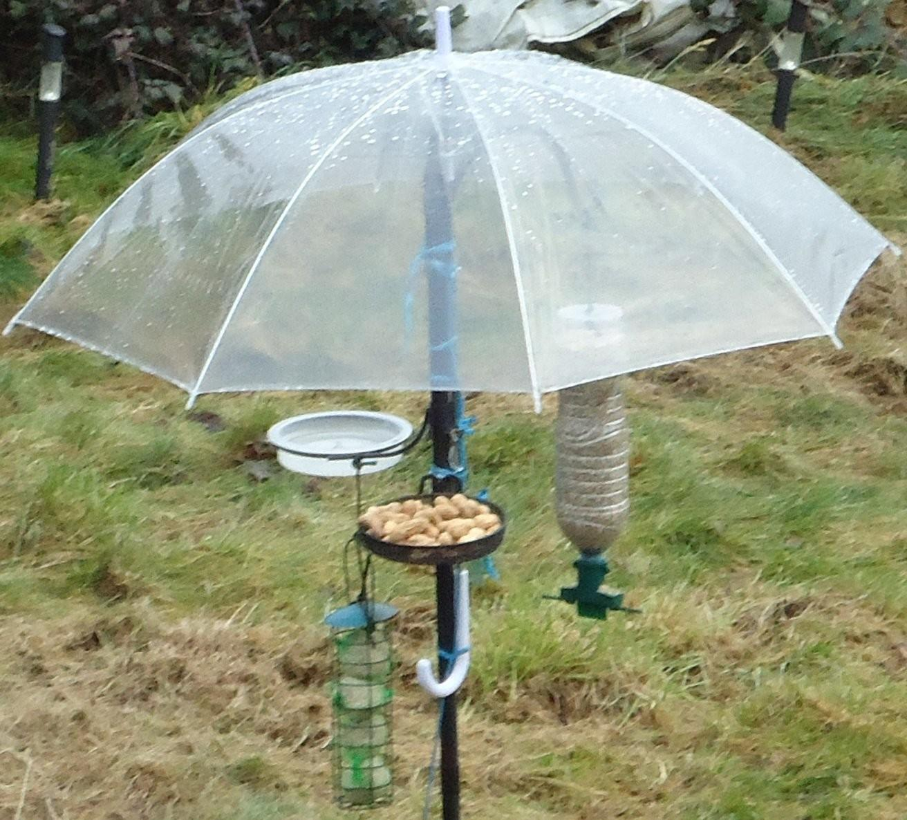 Squirrel Feeders Homemade