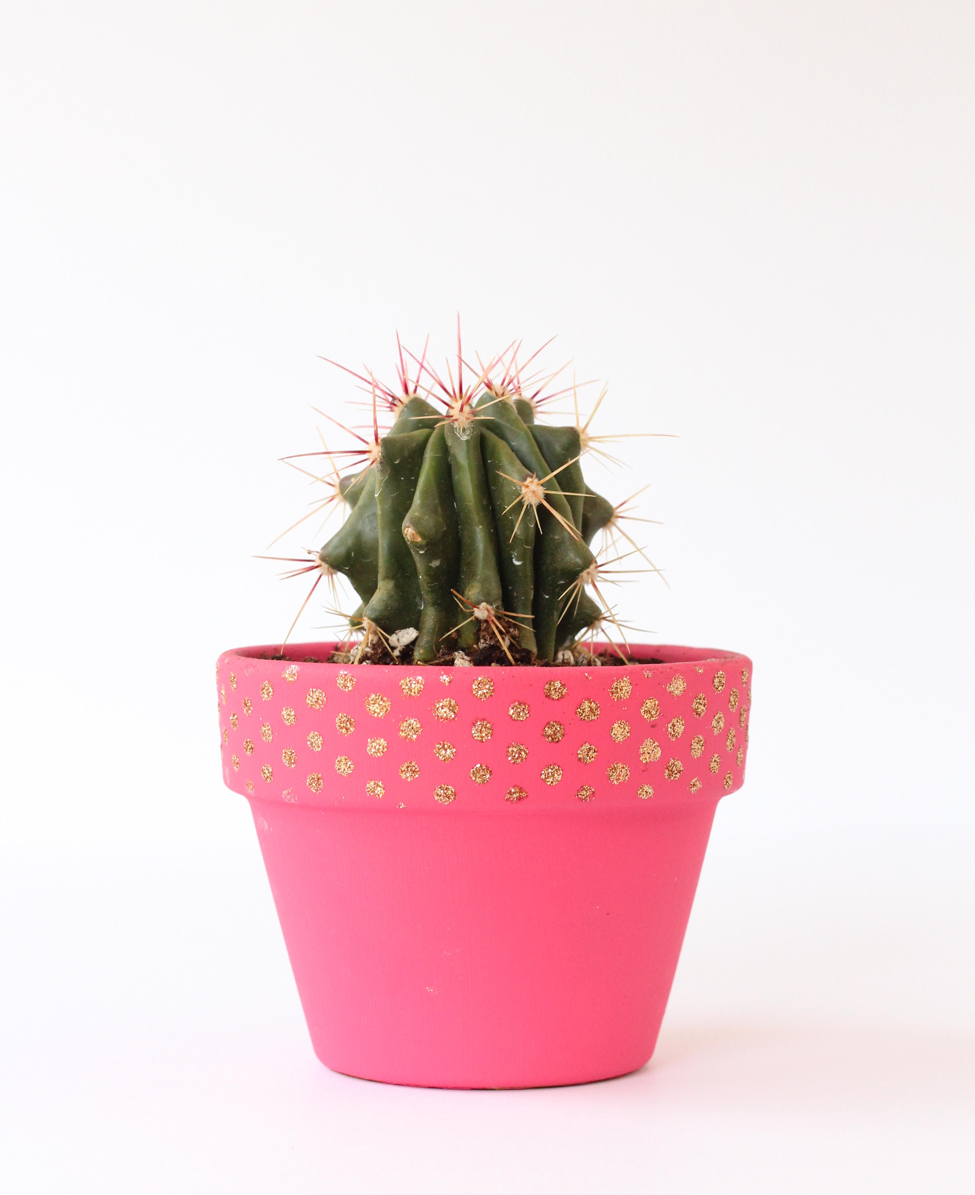 Stenciled Cactus Planter Crafted Life