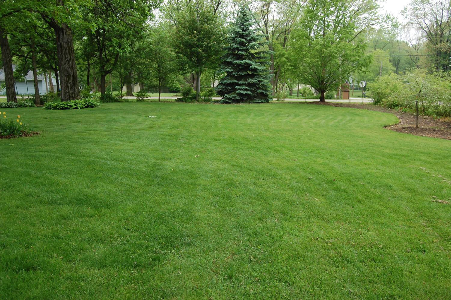 Struggling Lawn Care Braintree Professionals Can