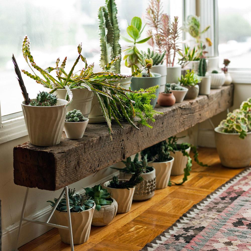 Stylish Indoor Plant Stands Sunset Plants Along Wood Bench
