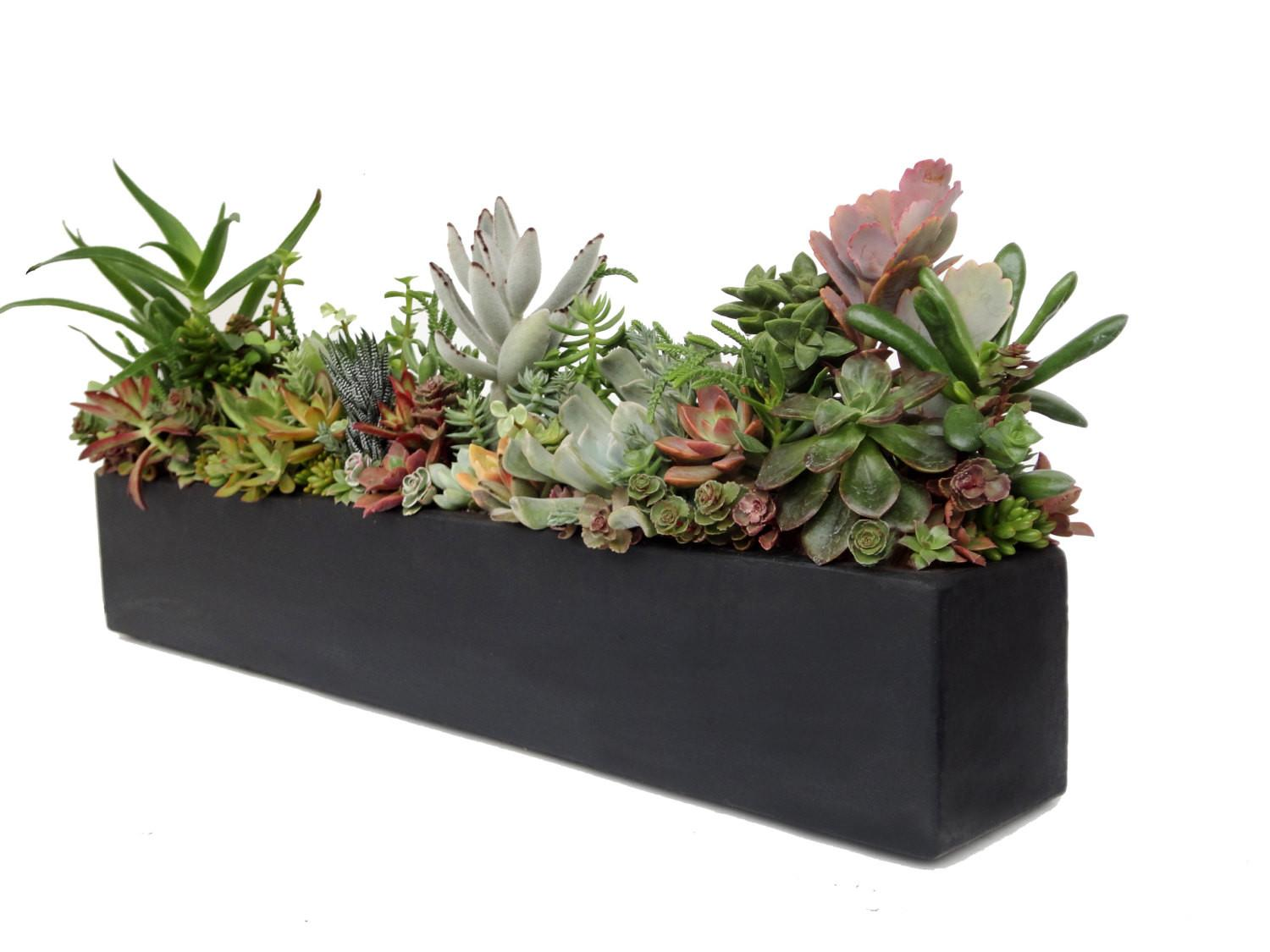 Succulent Arrangement Concrete Centerpiece Black