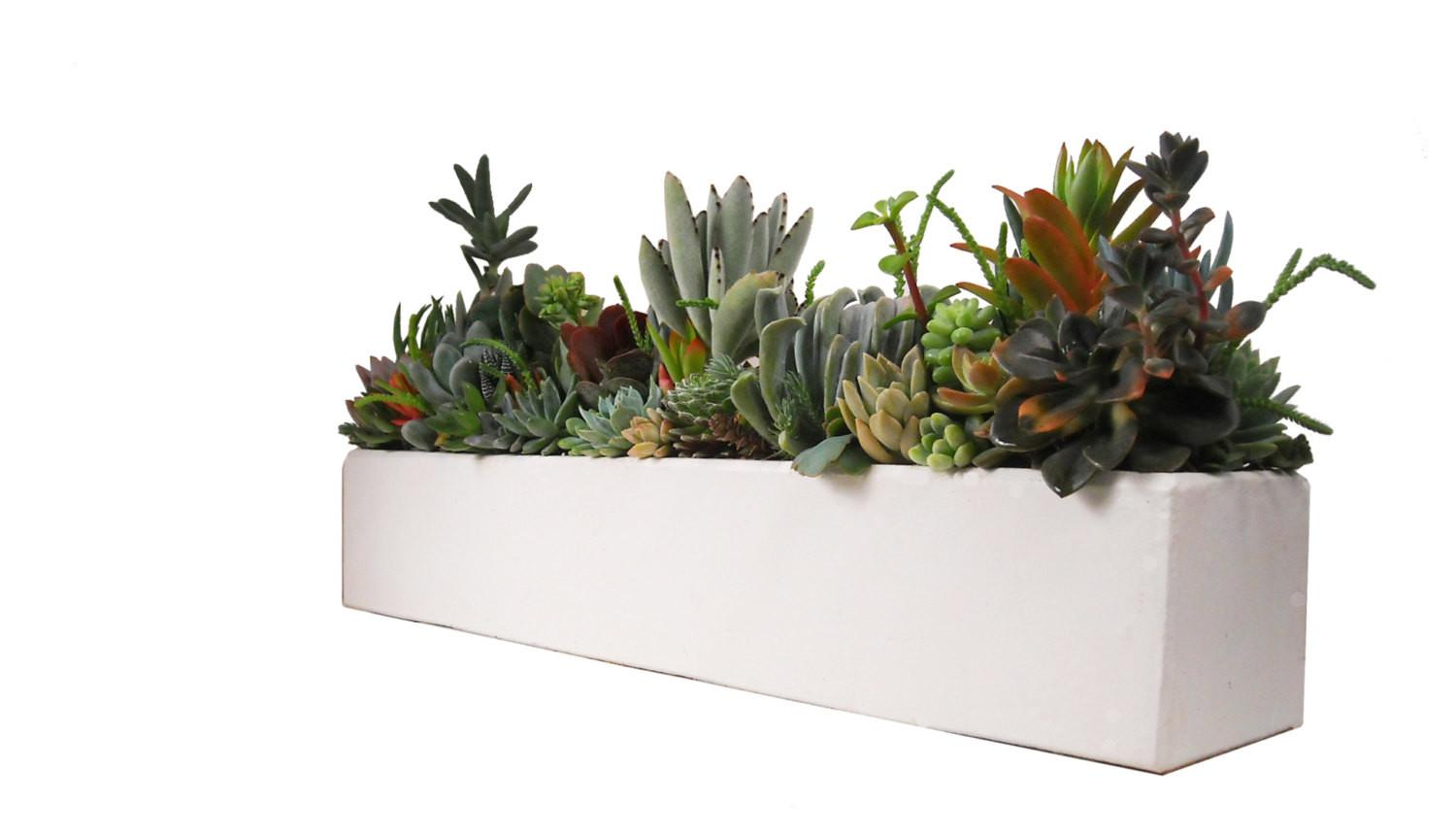 Succulent Concrete Centerpiece Arrangement Large