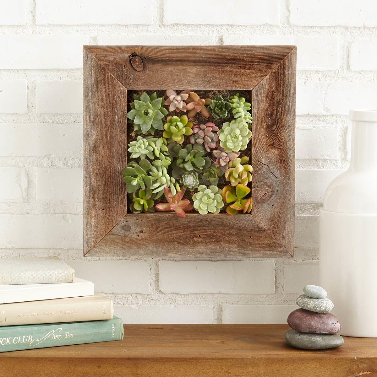 Succulent Living Wall Planter Kit Vertical Container