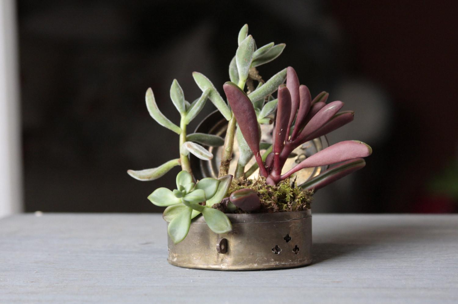 Succulent Planter Arrangement Tin Chess