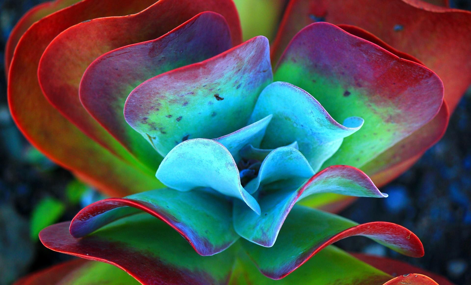 Succulent Plants Nature Macro