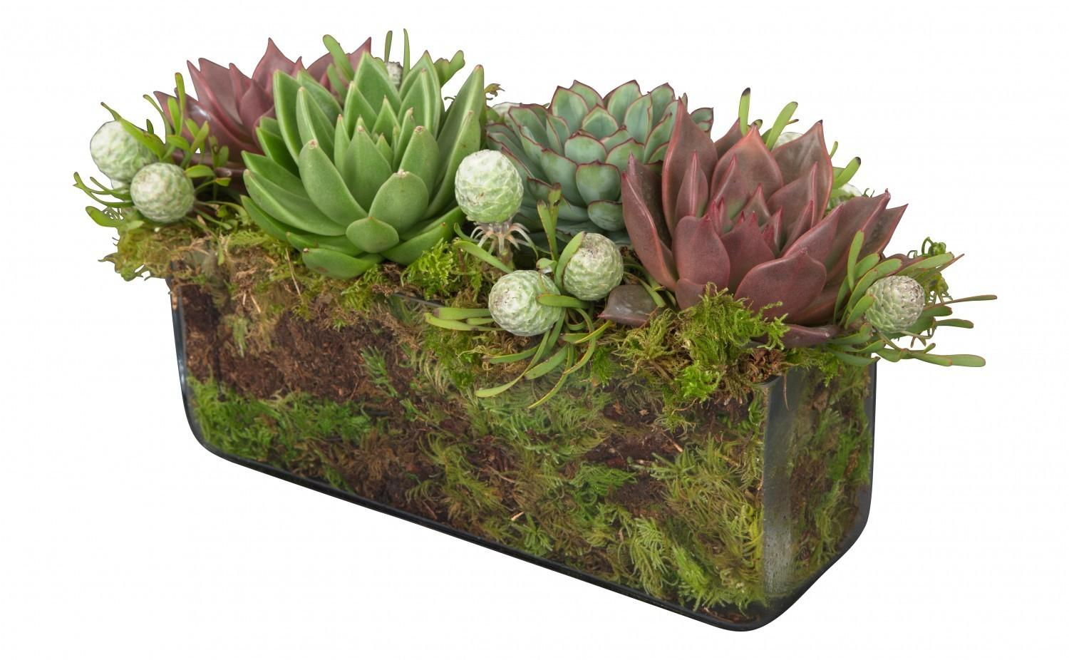 Succulent Rectangle Arrangement Jayson Home