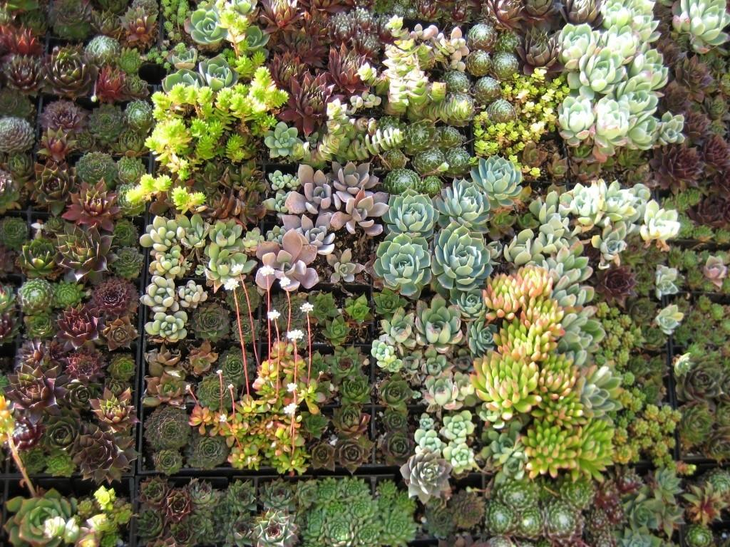 Succulent Wall Art Papery Cakery
