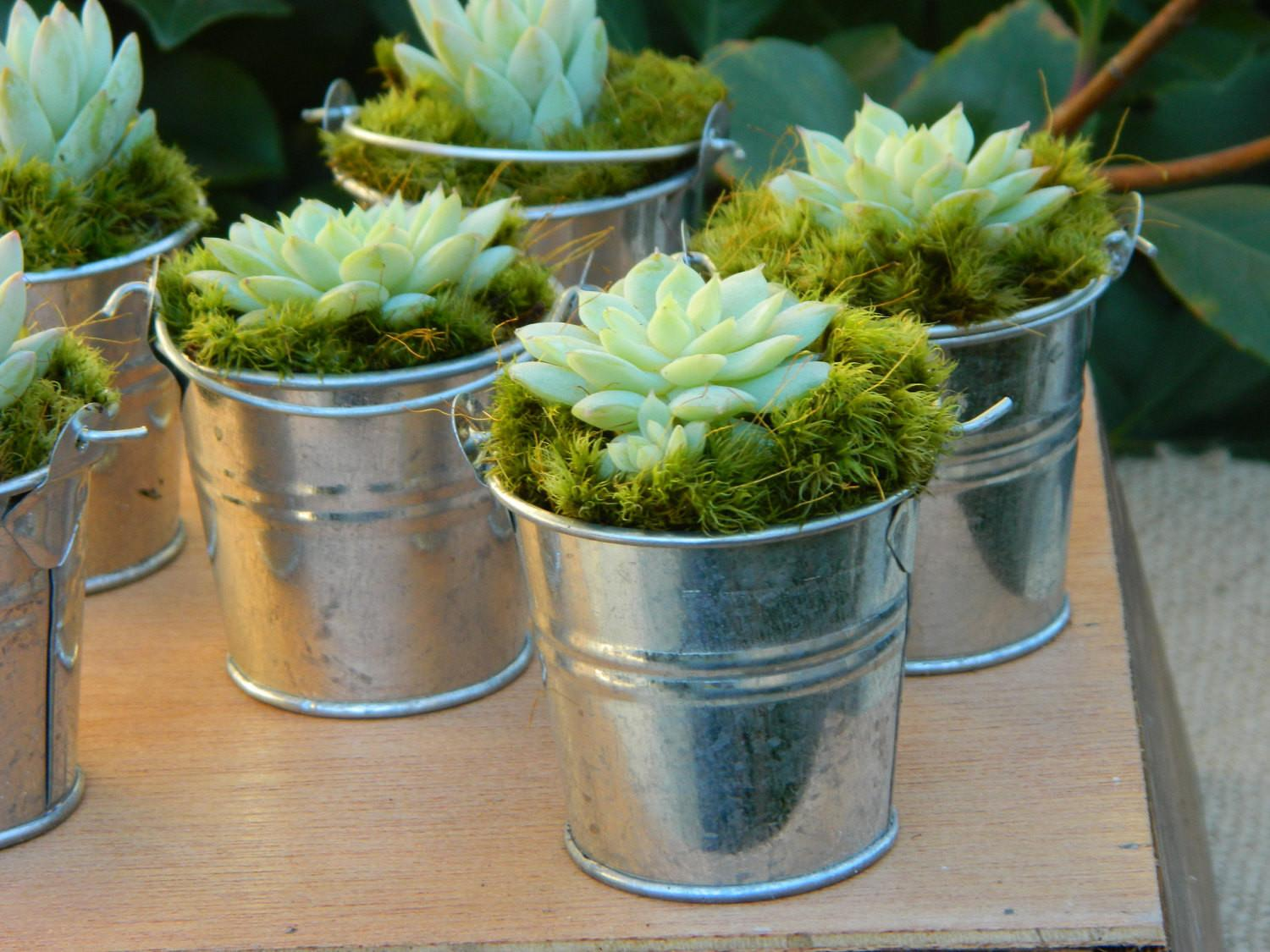 Succulent Wedding Favor Bridal Shower