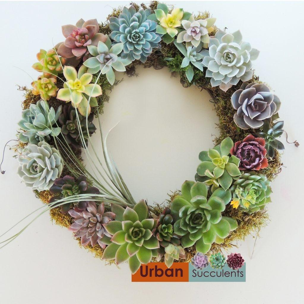 Succulent Wreath Urban Succulents