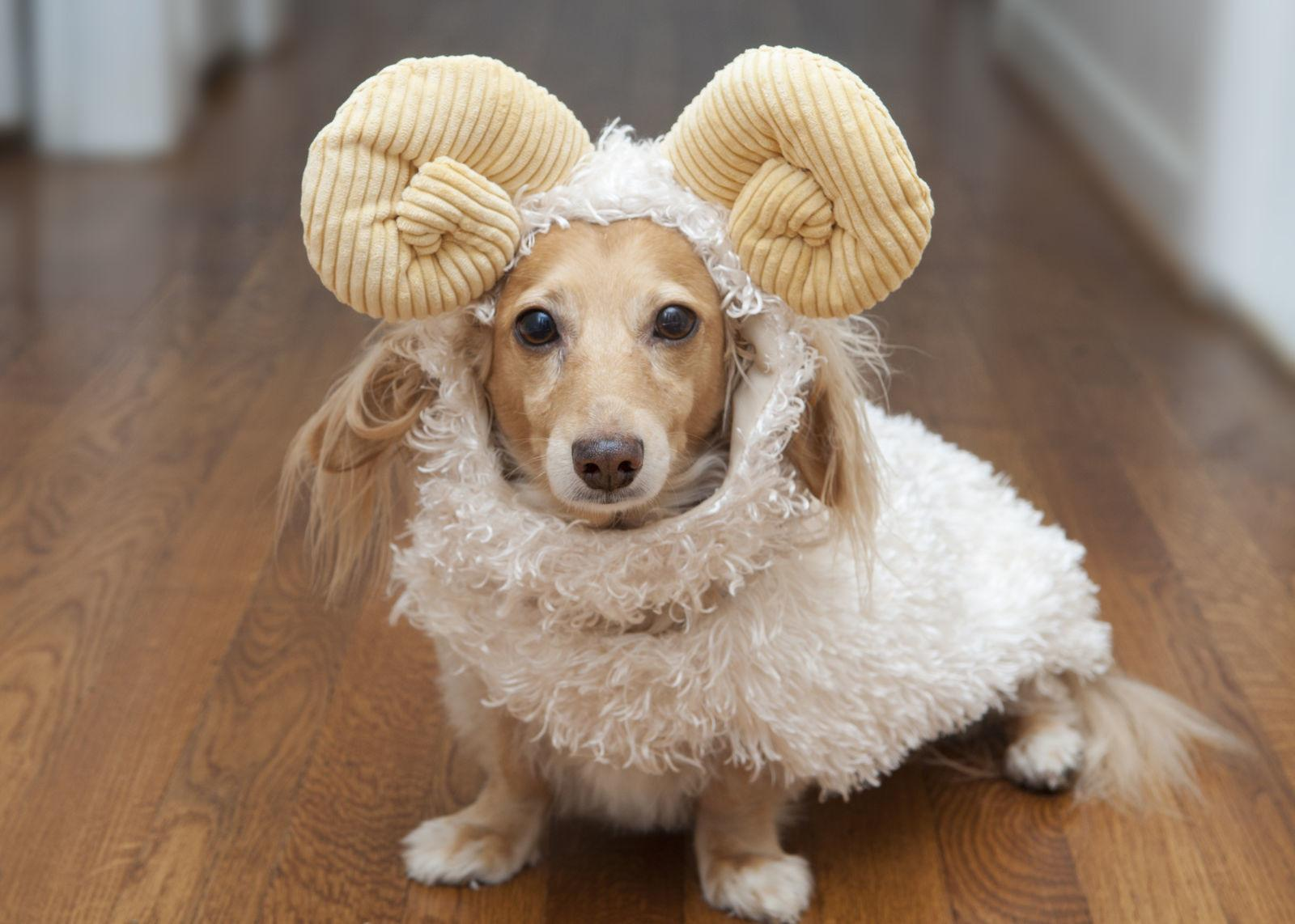 Super Cute Halloween Costumes Dogs