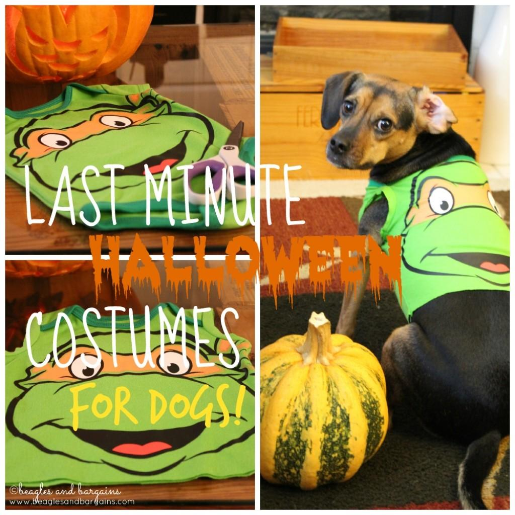Super Easy Couples Costumes Your Dog Beds
