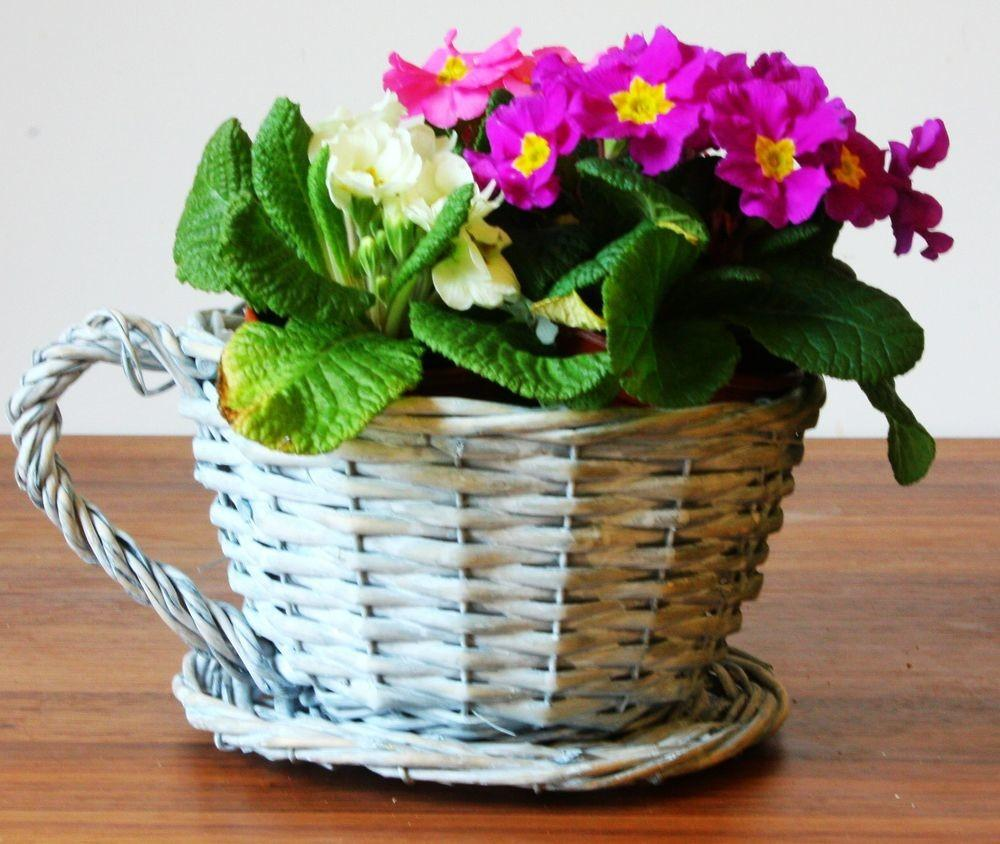 Tea Cup Shaped Wicker Gift Hampers Flower Pot Home Deco
