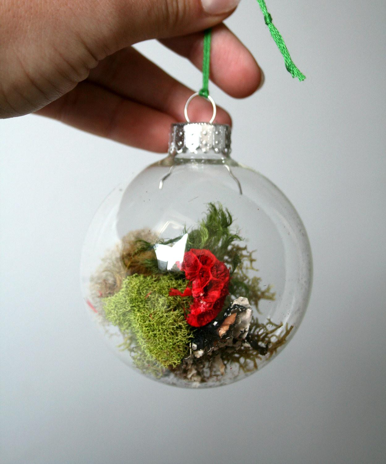 Phenomenal Diy Christmas Terrariums Plants Not That Express The Ultimate In Luxury Incredible Pictures Decoratorist