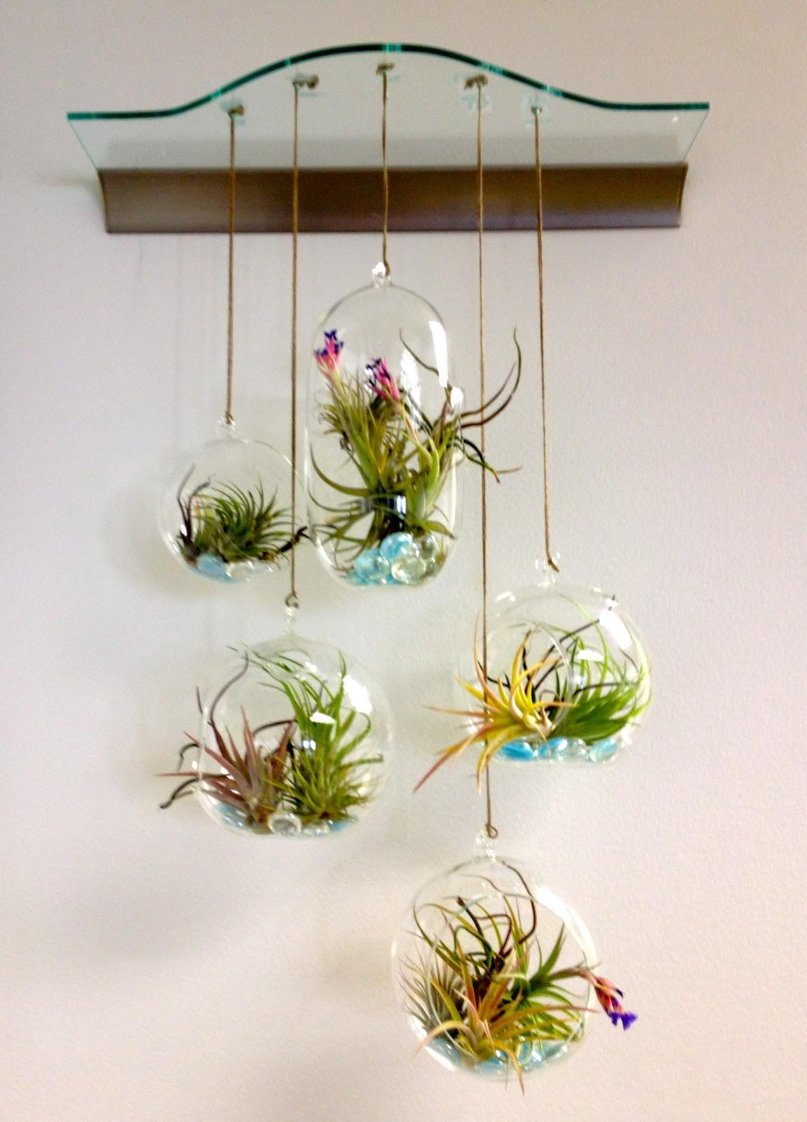 Terrarium Hanging Glass Bubble Air Plant Containers