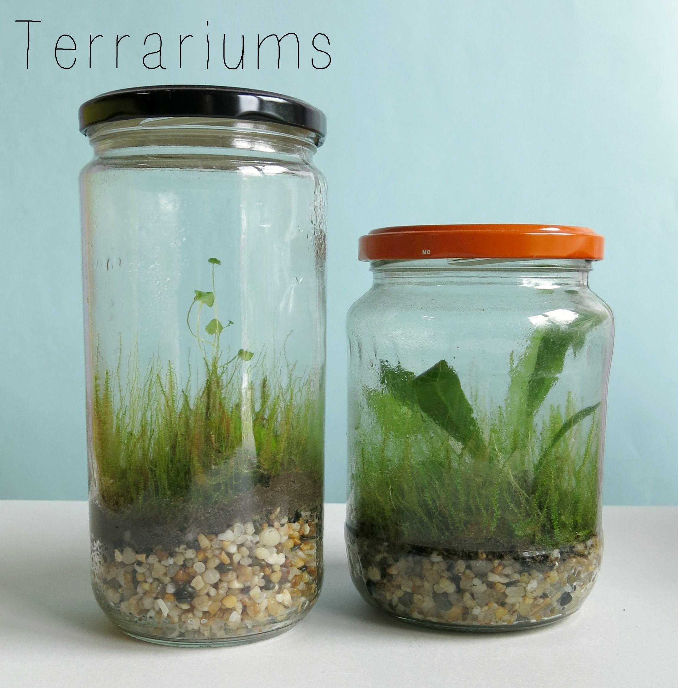 Terrariums Hands Brisbane