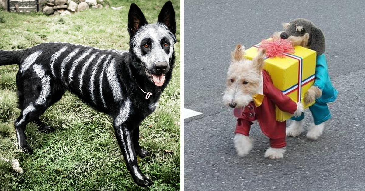 Terrifyingly Pawsome Halloween Costumes Dogs