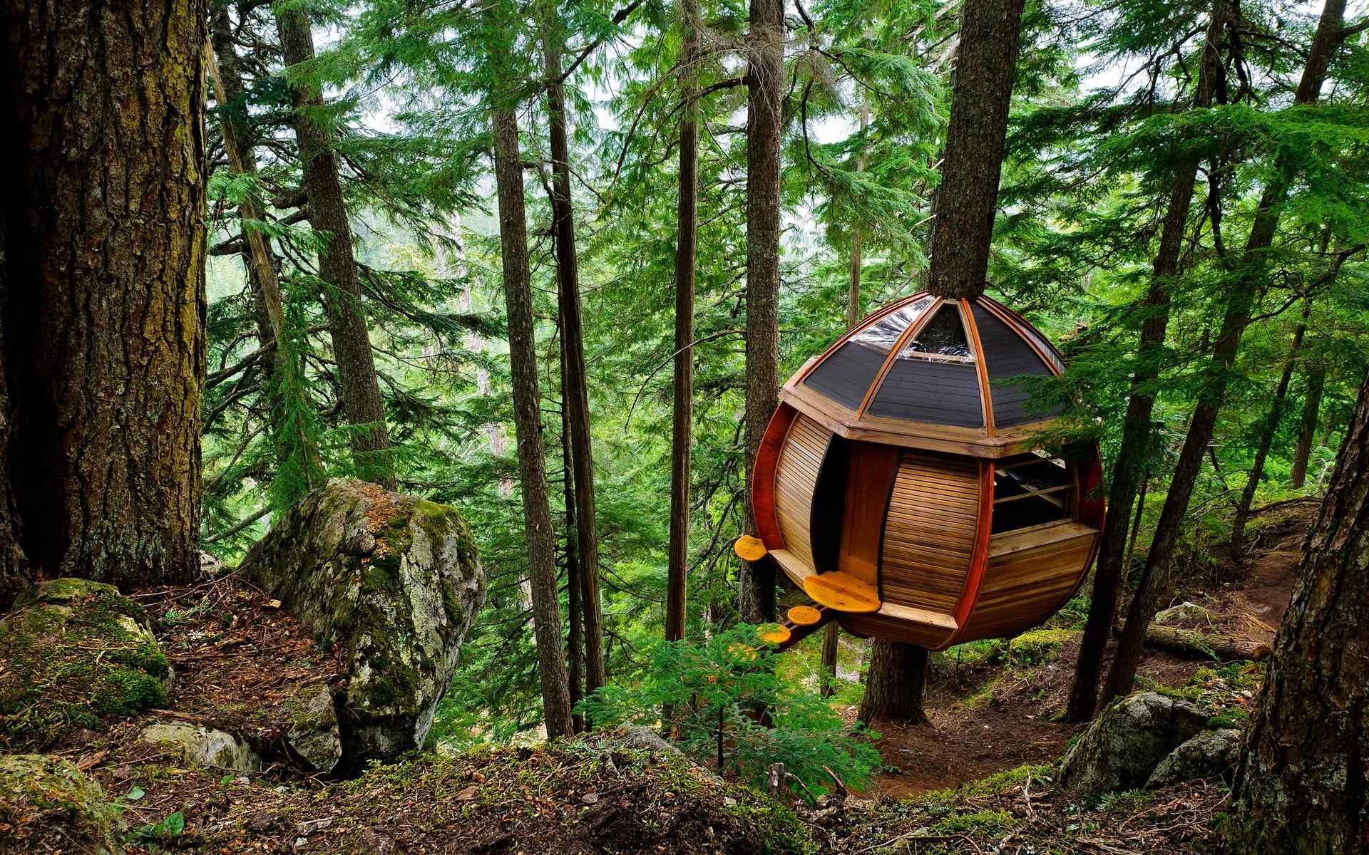 There Secret Treehouse Hiding Woods Whistler