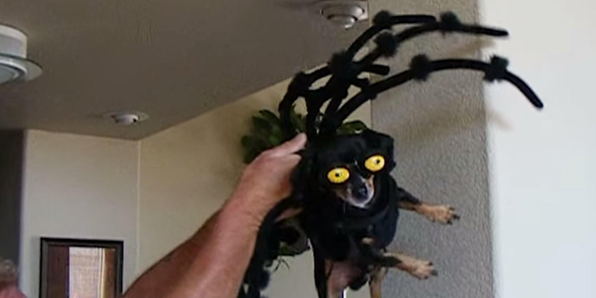 These Dogs Better Halloween Than Humans Huffpost