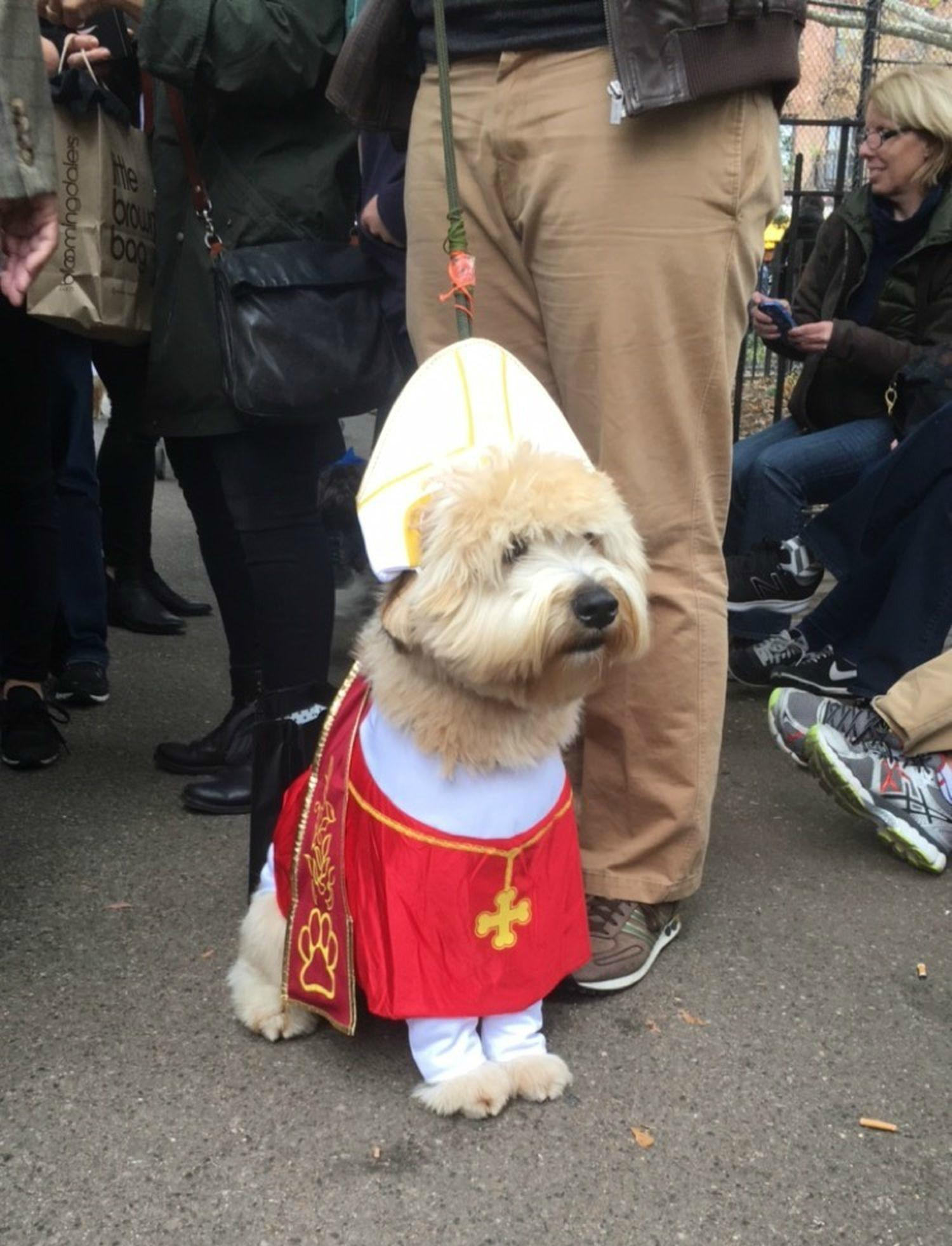 These Funny Halloween Costumes Dogs Way Too