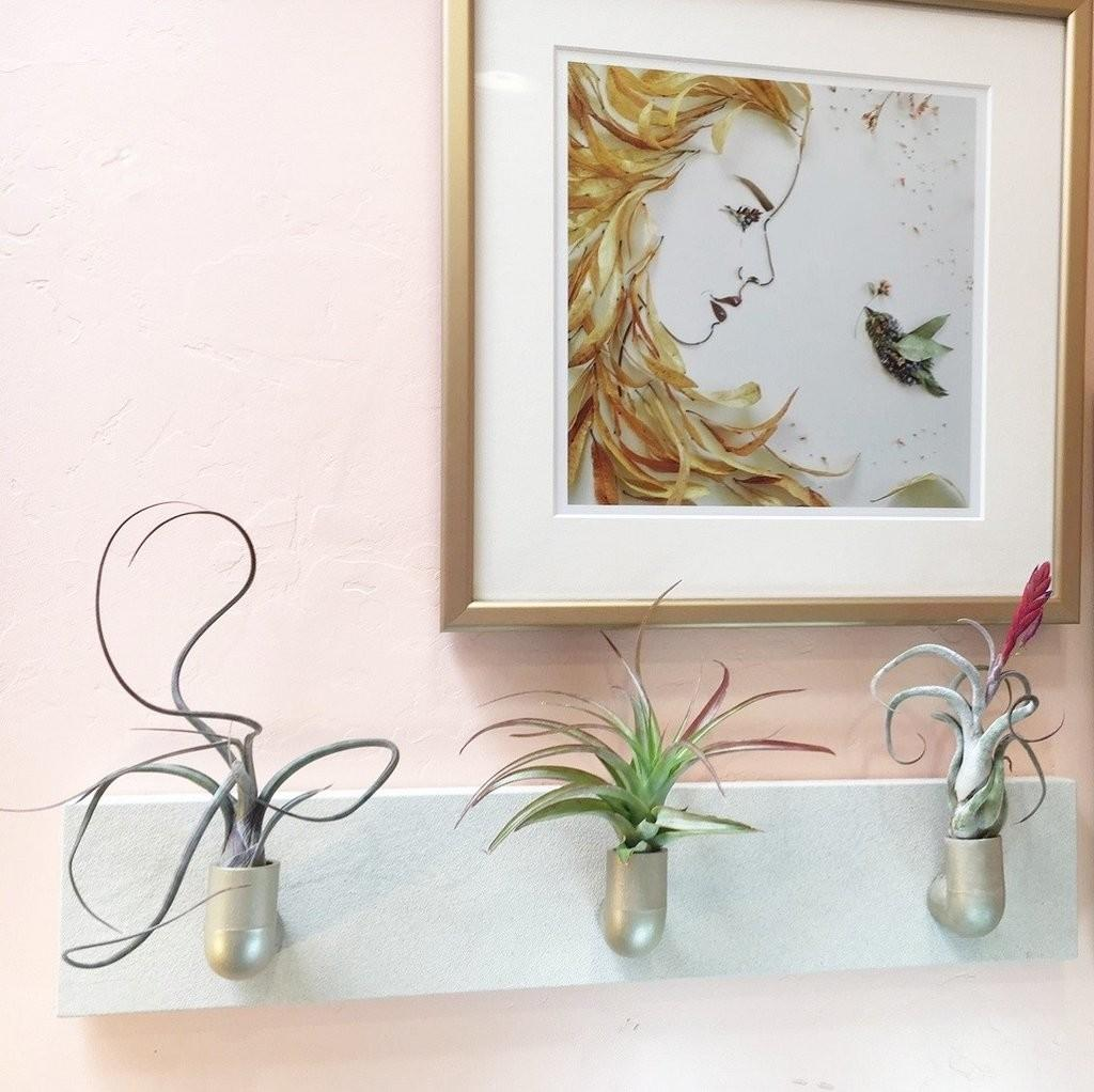 Tillandsia Wall Fountain Diy Hanging Air Plants Easy