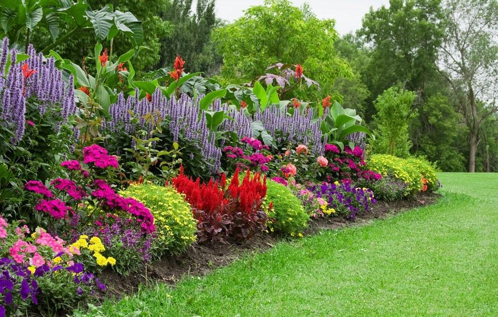 Tips Growing Stunning Organic Flower Garden