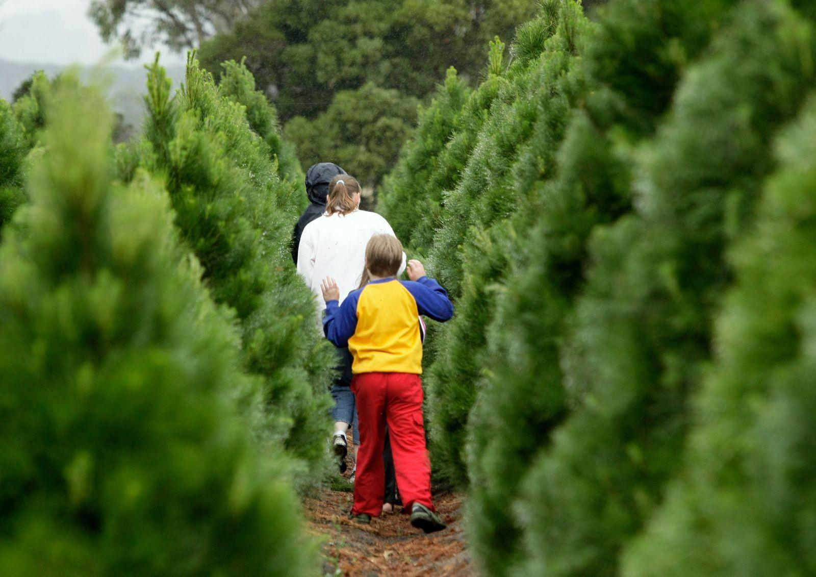 Tips Picking Out Perfect Christmas Tree
