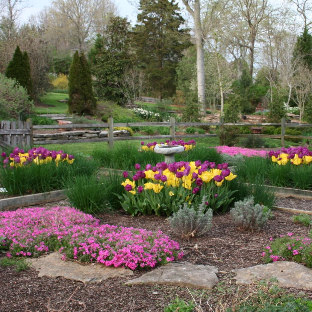 Tips Planting Tulips Tennessee Acer Landscape