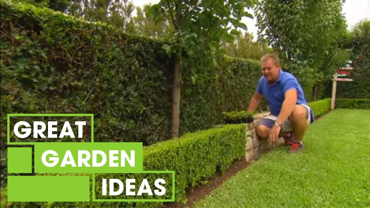 Tips Tricks Perfect Hedging Gardening Great Home Ideas