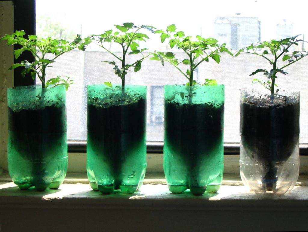 Tomatoes Recycled Pop Bottle Planters Principles