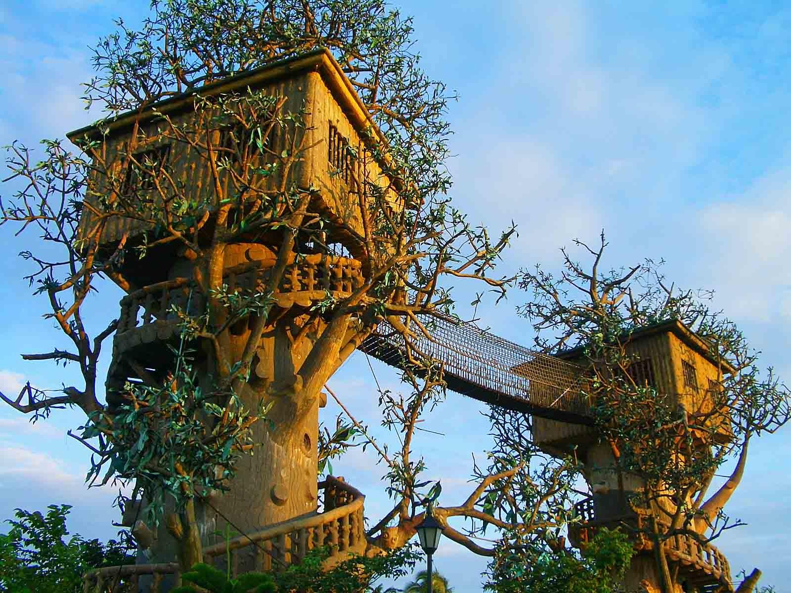 Top Beautiful Amazing Tree House Pics