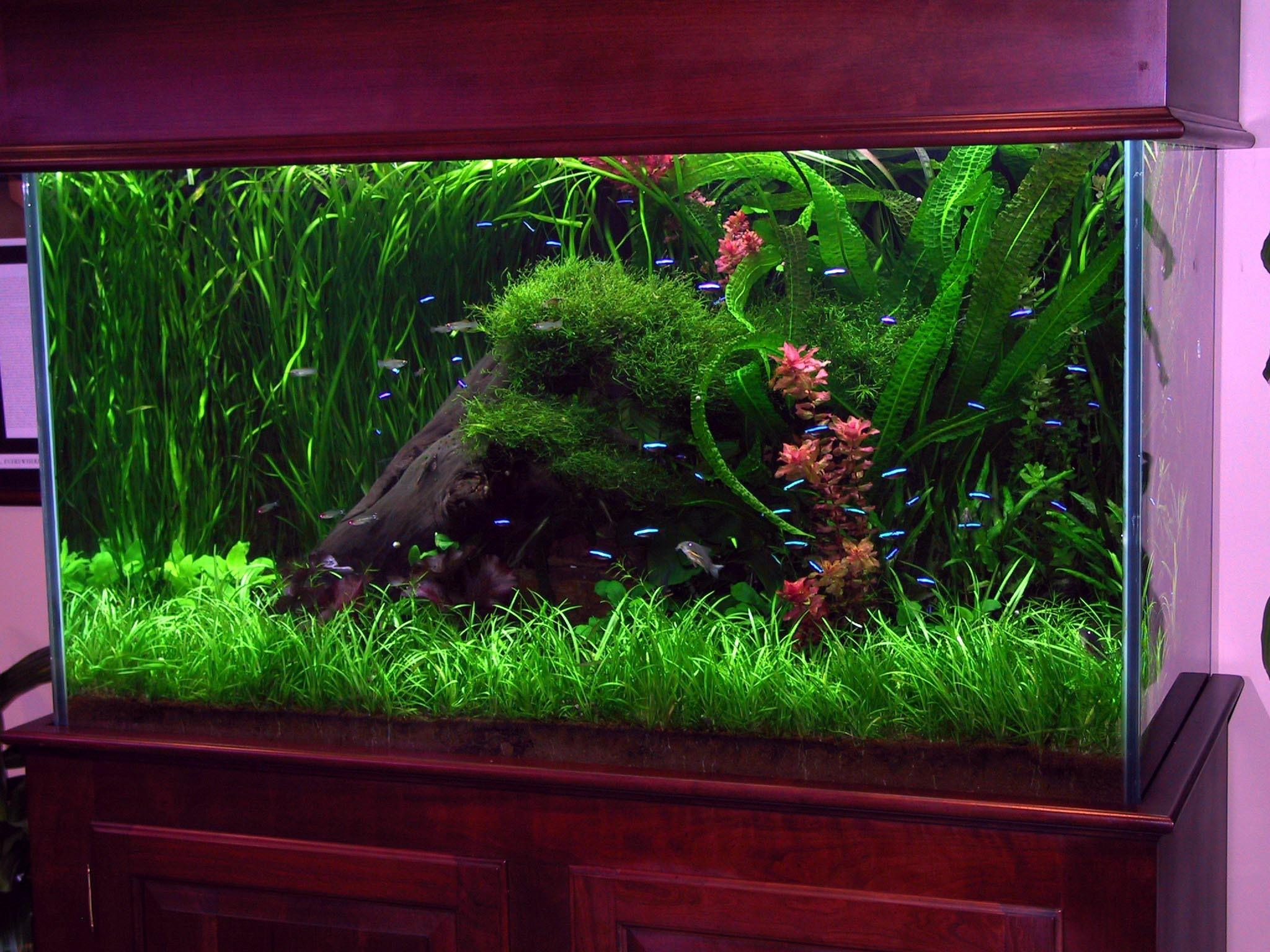 Top Fish Tank Idea Cool Ideas 6740