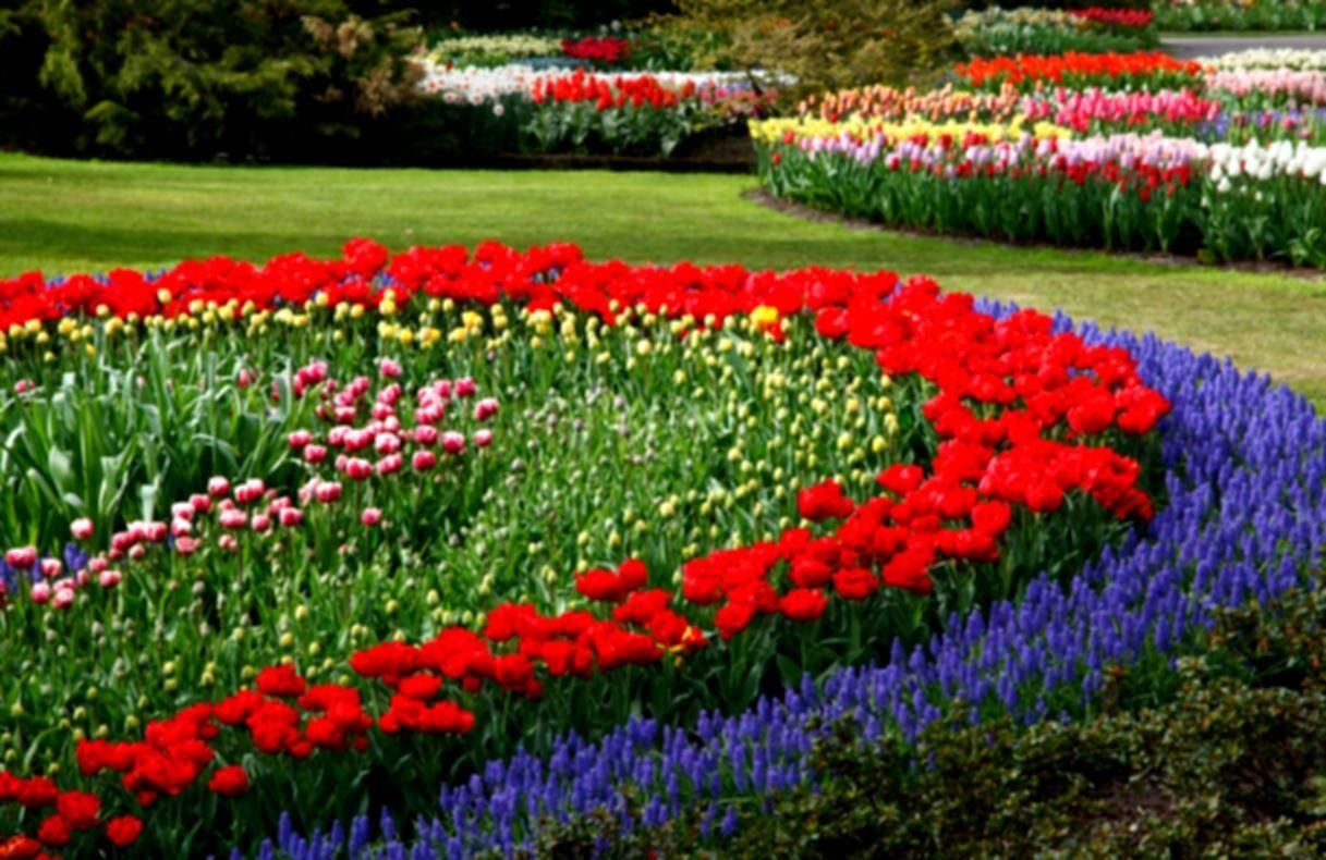 Top Planting Ideas Flower Beds Beautiful