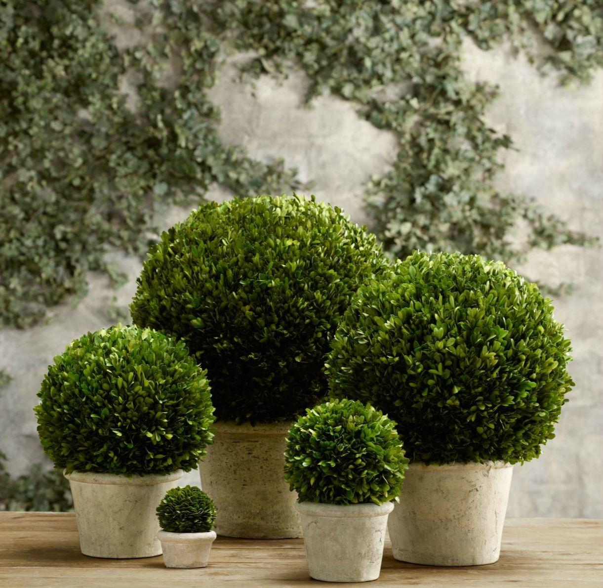 Topiary Style Dash Manicured Charm