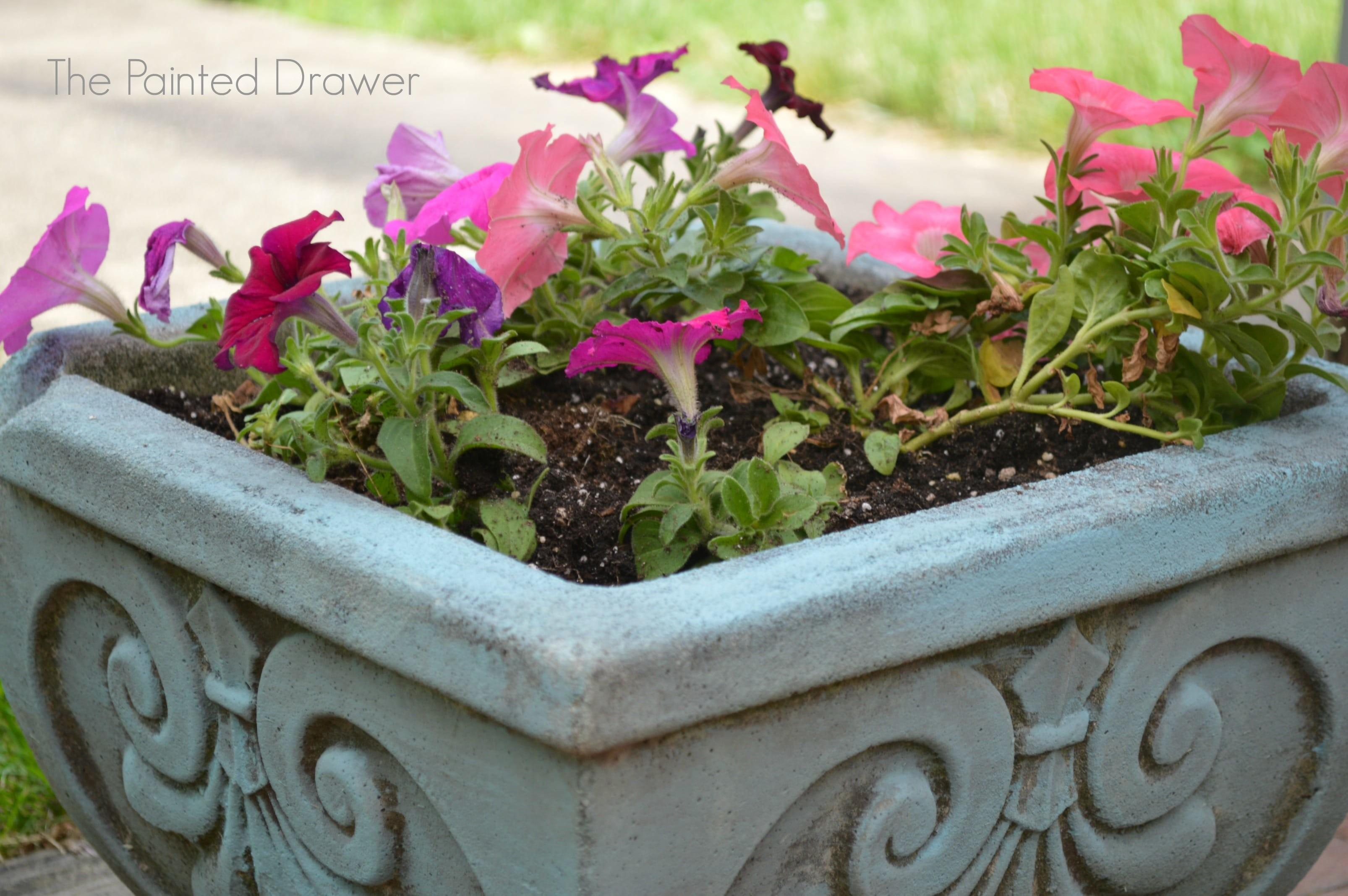 Transforming Old Concrete Planters Feature