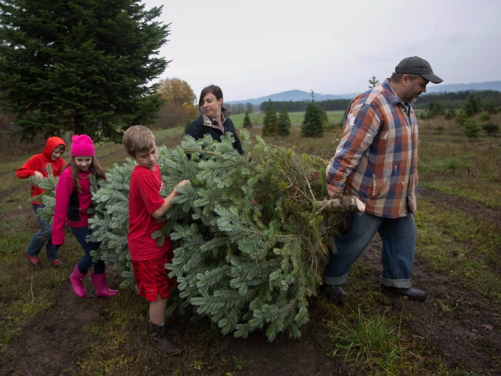 Tree Sellers Reveal Insider Tips Choosing