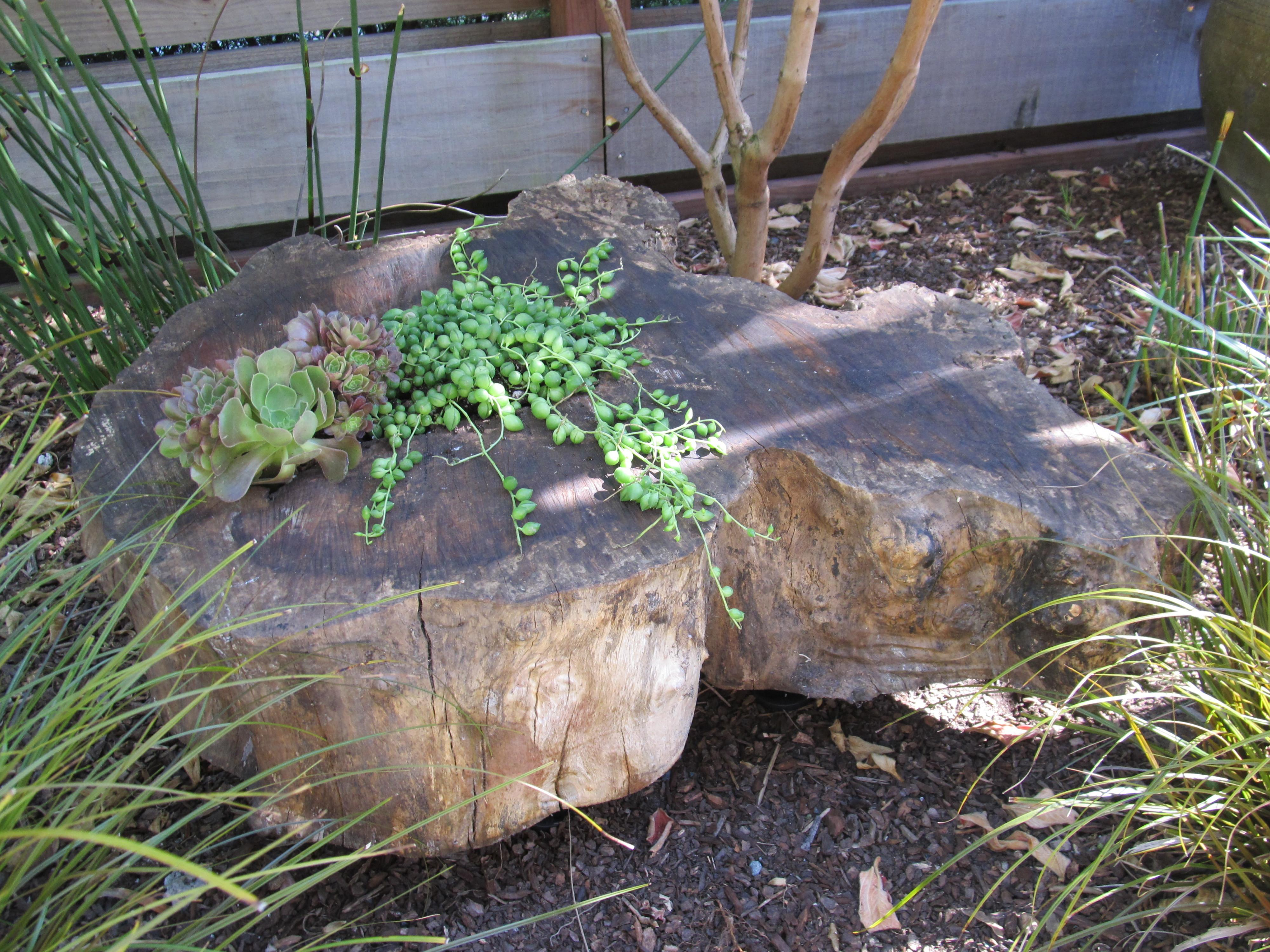 Tree Stump Planter Super Easy Tutorial Courtney Out Loud