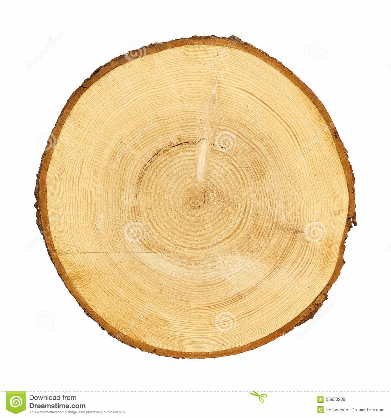 Tree Trunk Cross Section Clipping Path Stock
