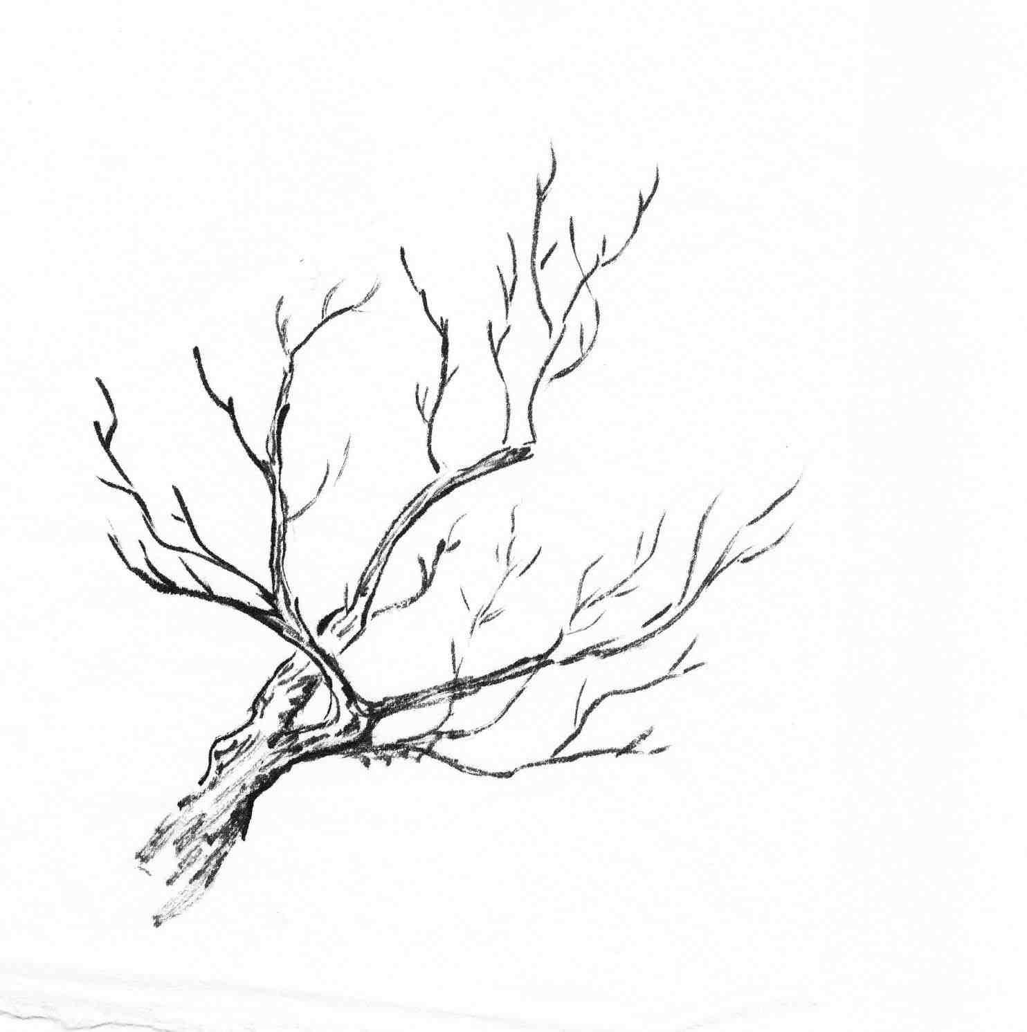 Trees Study Followmybrushmarks Painting Tree Stick Drawing