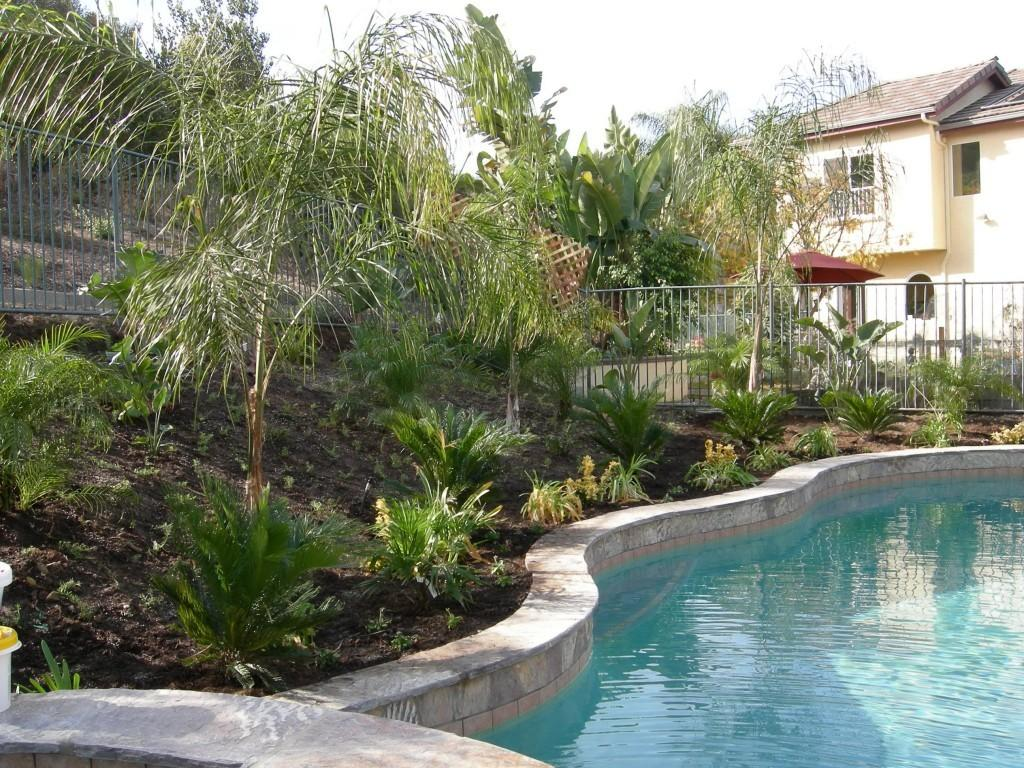 Tropical Landscape Ideas Small Yards Inspirations Best