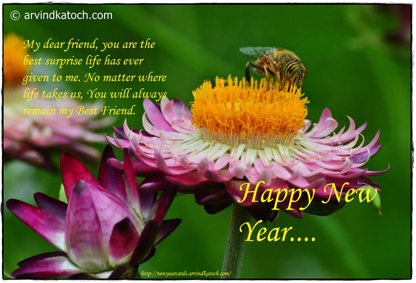 True Pic New Year Cards 2017 Happy Card