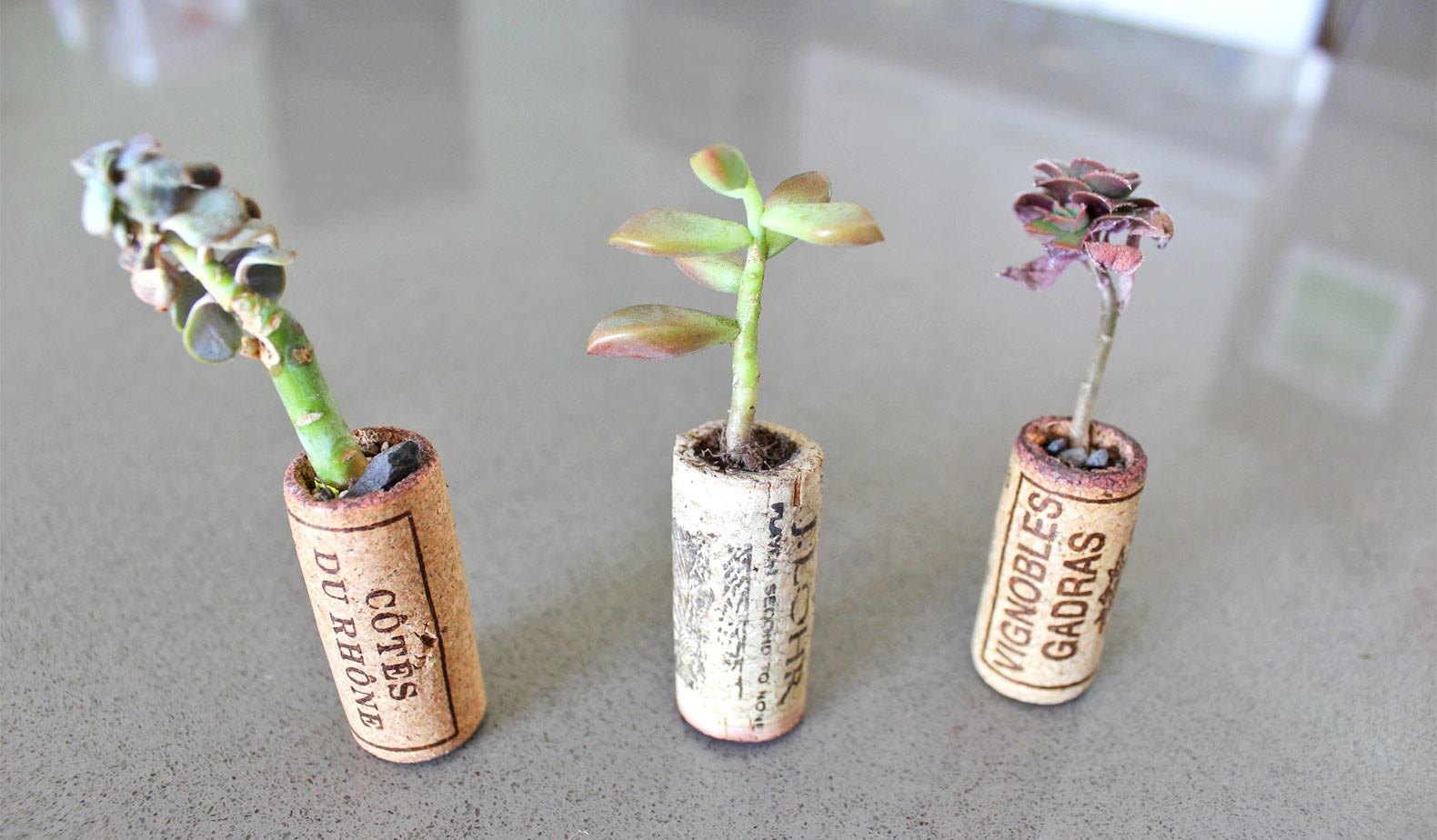 Turn Old Wine Corks Into Miniature Planters