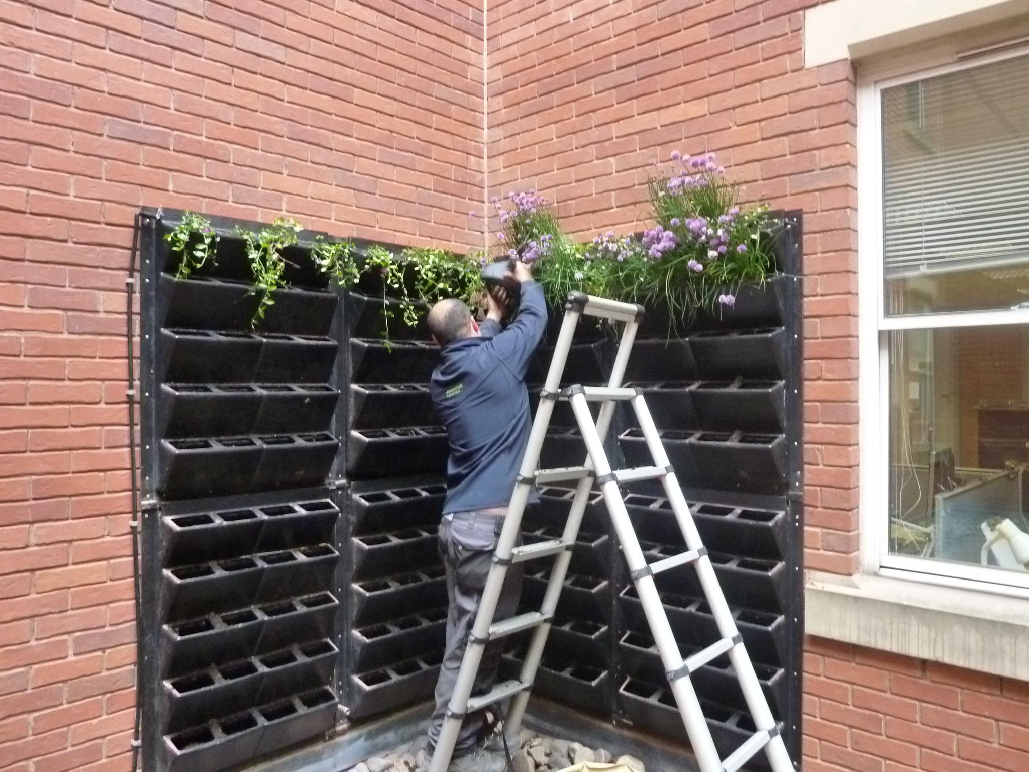 Turn Vertical Space Into Edible Living Wall Urban