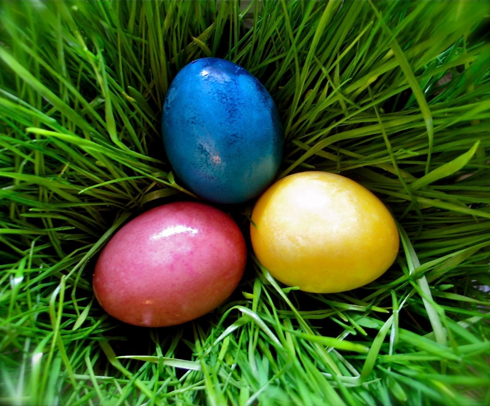 Twig Toadstool Vibrant Vegetable Dyed Easter Eggs