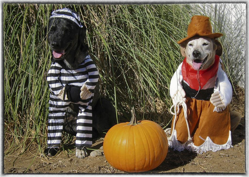 Two Dogs Halloween Costumes Funny Terms