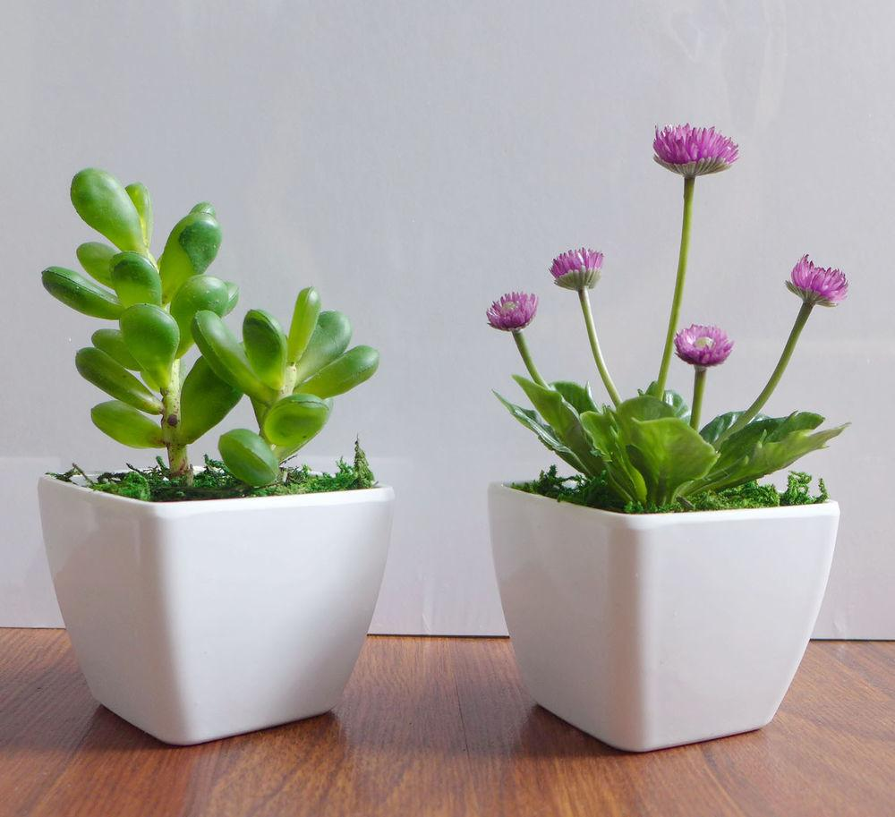 Two Potted Artificial Succulents Yacon Small Flower Plants