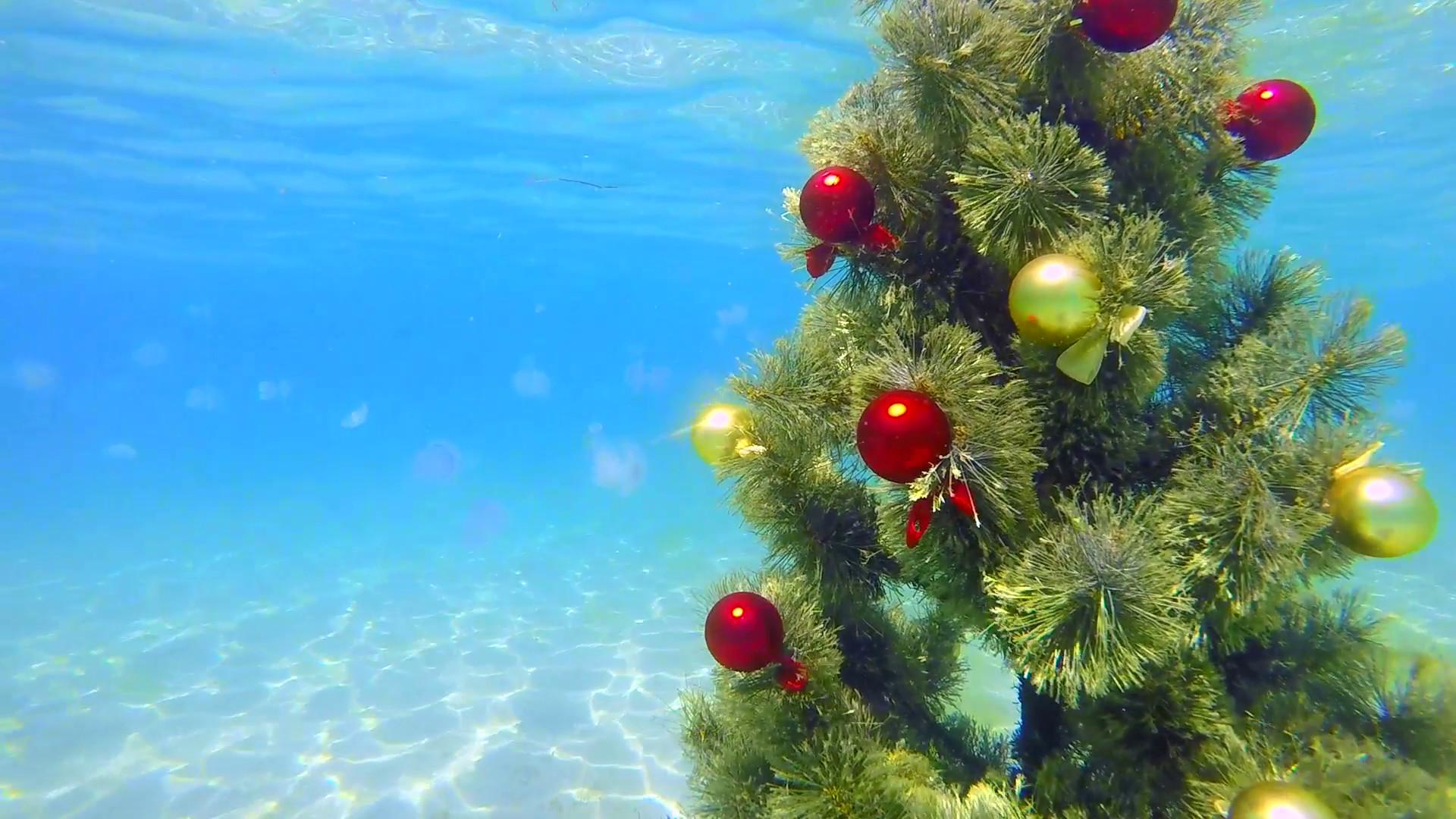 Under Water Decorated Christmas Tree Sparkling